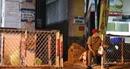 Công an TP Hồ Chí Minh xử lý 11 người nhập cảnh trái phép